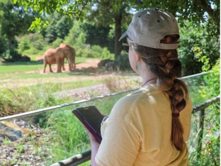 An LR student studying elephants at the North Carolina Zoo